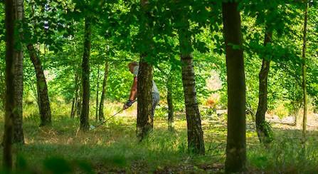 zie de golfer tussen de bomen